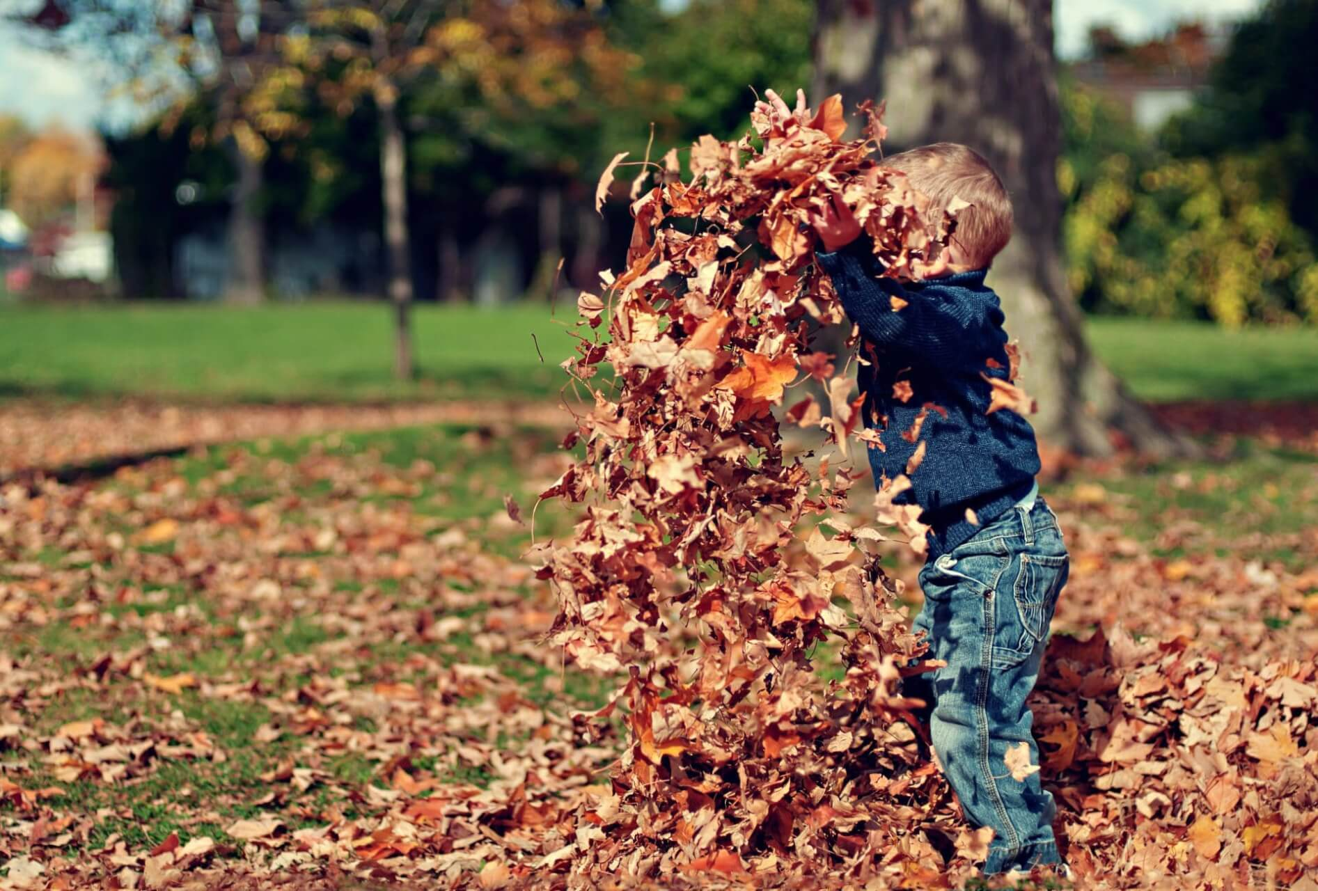 Jumping in Leaves & Other Fun Stuff